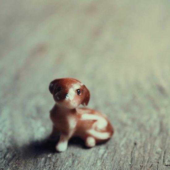 Puppy Eyes Art Print