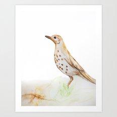 Study of a Bird Art Print