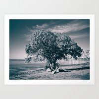 The Pohutukawa, New Zeal… Art Print
