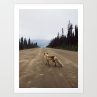 Road Fox Art Print