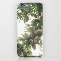 iPhone & iPod Case featuring Almond Tree by Anna Delores
