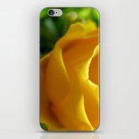 Yellow Roses #5 iPhone & iPod Skin
