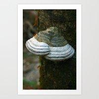 FUNGI -  Lichen Art Print