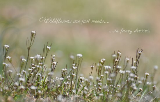 Wild Flowers are Just Weeds in Fancy Dresses Art Print