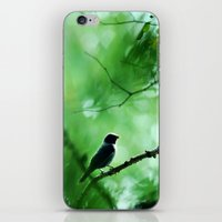 Indigo Bunting iPhone & iPod Skin
