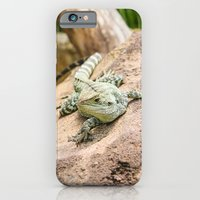 iPhone & iPod Case featuring Lizard's Rest by AllanB