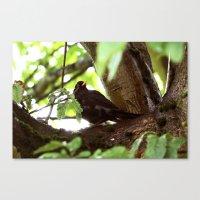 simply blackbird Canvas Print