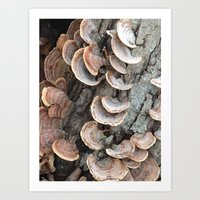 Fungi III Art Print