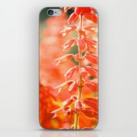 Basking In The Sun iPhone & iPod Skin