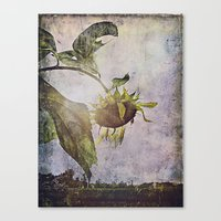 rural sky sunflower Canvas Print