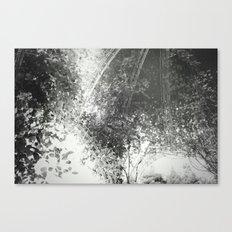 Canopy - Black & White Canvas Print