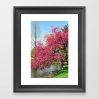 Spring Crabapple Blooms Framed Art Print