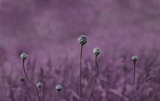 Nature purple garden Art Print