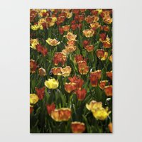 A sea of spring tulips Canvas Print
