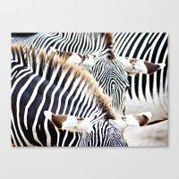 Abstract Zebras Canvas Print