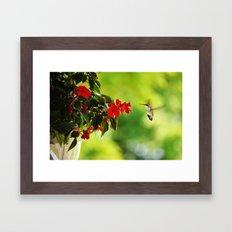 Hummingbird at the Flowers Framed Art Print