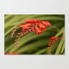 Blooming Reds Canvas Print