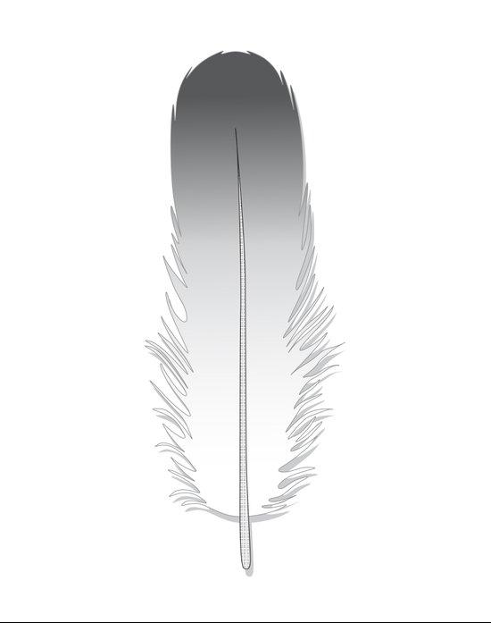 White Fuzz Feather Canvas Print