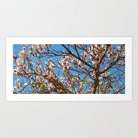 Spring 2013 01 Art Print