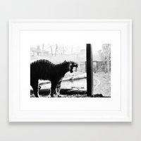 Tiger. Framed Art Print
