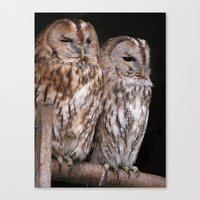 Tawny Owls In Nature Canvas Print