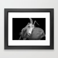 black goat Framed Art Print