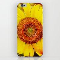Inflorescence, Helianthu… iPhone & iPod Skin