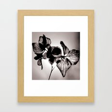 Sun Shine Framed Art Print