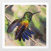Copper-Rumped Hummingbird Art Print