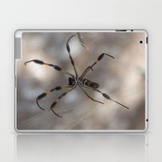 Spider 1 | Picture A Laptop & iPad Skin