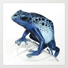 Blue Poison-Dart Frog Educational Layout Art Print
