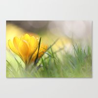 Early In The Morning, Wh… Canvas Print