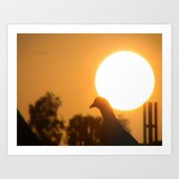Pigeon Eclipse Art Print