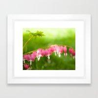 My Heart on a String.  Bleeding Heart Flower Photo.  Pink. Framed Art Print