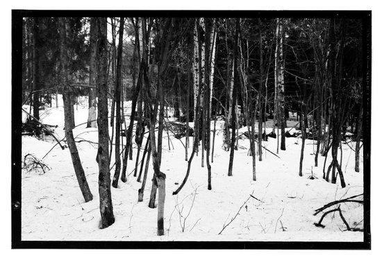 NORWEGIAN FOREST IX Art Print
