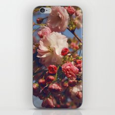 Blossoms in Beijing iPhone & iPod Skin