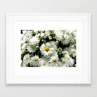 Daisy Dandy Framed Art Print