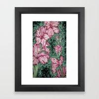 Pink Gladiolas Framed Art Print