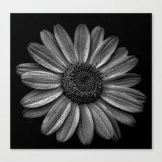 Darkened Daisy Canvas Print