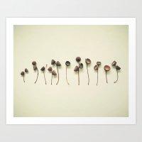 Acorn Collection Art Print
