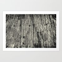 Aging Maple Log 2012 Art Print