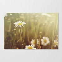 A Daisy Day Canvas Print