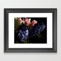 Hyacinth 10 Framed Art Print