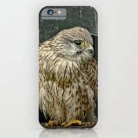 Young Kestrel In A Broke… iPhone 6 Slim Case