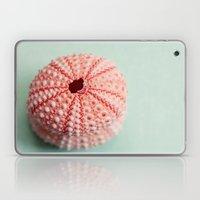 sea urchins series no 1 Laptop & iPad Skin