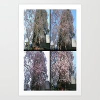 Tree Blossoms Art Print
