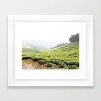 tea fields::rwanda Framed Art Print