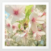 cherry blossom Art Prints featuring Cherry Blossom by Cassia Beck