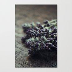 Cut Lavender Canvas Print