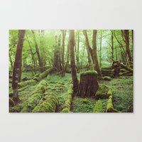 Mossy Forest Canvas Print